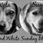 Blog_BW_sun_nolasugar_bwbadge_pm